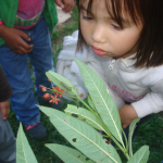 caterpillar-watching
