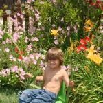 our-garden-1