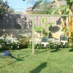 Back Yard Swings